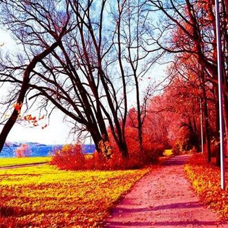 枫树林中的秋天