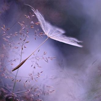 一个健康充满活力的心态,就能活出一个阳光健康的生活,一种怀疑暗淡的心态,活出来的人生充满哀戚。