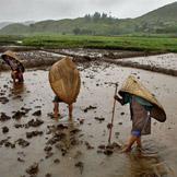 最多雨的地方:印度 Mawsynram , 这个印度村庄每年接受着平均467英寸的降雨量。