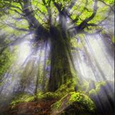 如果生命如繁花,那我可否是一株树,在静寂中细数从枝叶间漏下的斑驳时光?