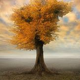 心是一棵树,爱与希望的根须扎在土里,智慧与情感的枝叶招展在蓝天下。