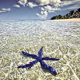 蓝海星,法属波利尼西亚塔希提岛,清澈见底的海水,好干净的美