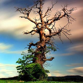 那干枯的枝蔓又抹上了一层新绿。是什么让它的生命如此顽强?是风,是雨,是不灭的追求。