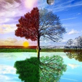 一棵树的春夏秋冬每年都在同样的重复着,演绎着不变的景色,而人却会随着时光流逝而慢慢变老,青春消逝,时光不再。